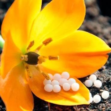 Guía para cuidar las plantas con remedios homeopáticos
