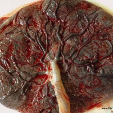 La placenta no sólo es un órgano fascinante, sino que también ¡es bello!