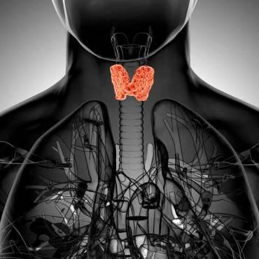 Qué comer para ayudar a regular la tiroides